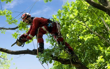 find trusted rated Oswestry tree surgeons in Shropshire