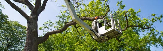 Oswestry tree surgery services