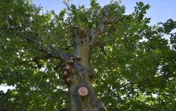 what is Oswestry tree surgery?