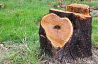free Oswestry tree stump removal quotes